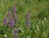 0003_Coquihalla_blooms.png